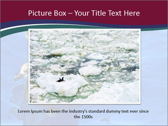 Grey-faced Petrel PowerPoint Templates - Slide 16