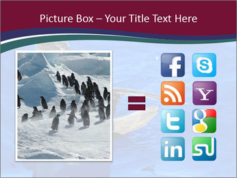Grey-faced Petrel PowerPoint Templates - Slide 21