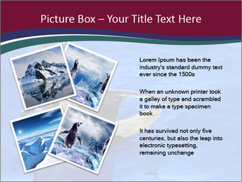 Grey-faced Petrel PowerPoint Templates - Slide 23