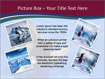 Grey-faced Petrel PowerPoint Templates - Slide 24
