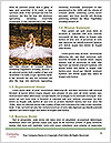 0000086171 Word Template - Page 4
