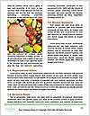 0000086270 Word Template - Page 4