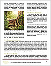 0000086340 Word Template - Page 4