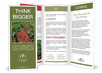 0000086366 Brochure Templates