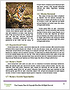 0000086367 Word Template - Page 4