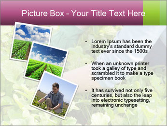 0000086420 PowerPoint Template - Slide 17