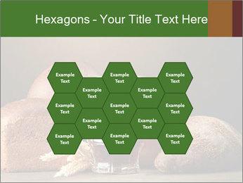 Tankard of kvass PowerPoint Templates - Slide 44