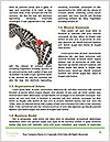 0000086446 Word Template - Page 4
