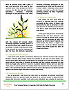 0000086626 Word Template - Page 4