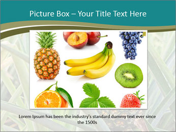 0000086670 PowerPoint Template - Slide 16