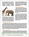 0000086700 Word Template - Page 4