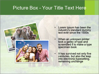 0000086724 PowerPoint Template - Slide 20