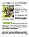 0000086724 Word Templates - Page 4