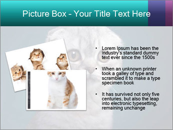 0000086748 PowerPoint Templates - Slide 20