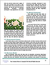 0000086796 Word Template - Page 4