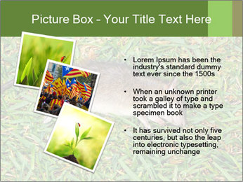 0000086857 PowerPoint Template - Slide 17