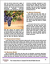 0000086885 Word Templates - Page 4