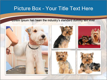 Care for dog hair PowerPoint Templates - Slide 19