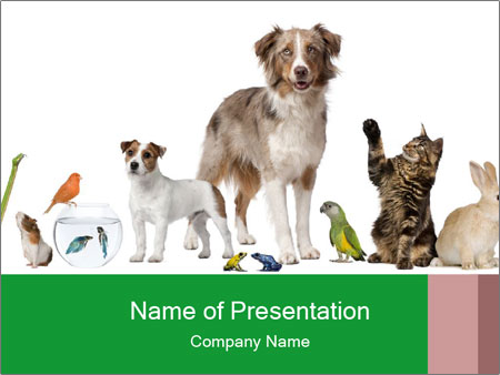 Group of pets PowerPoint Template
