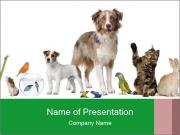 Group of pets PowerPoint Templates