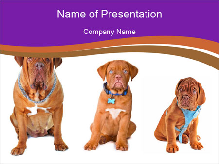 Evolution of the dogs PowerPoint Templates
