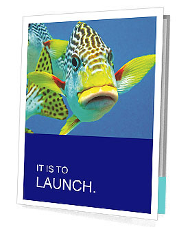0000087071 Presentation Folder