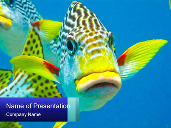 0000087071 PowerPoint Template - Slide 1