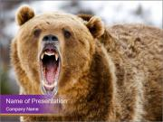 Grizzly PowerPoint Templates