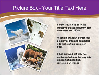 0000087081 PowerPoint Template - Slide 23