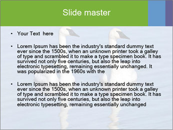 Swans swimming PowerPoint Templates - Slide 2