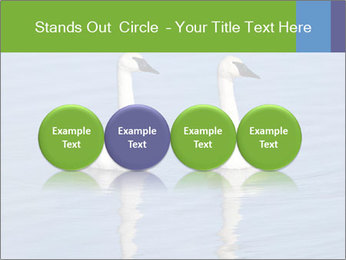 Swans swimming PowerPoint Templates - Slide 76