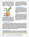 0000087115 Word Template - Page 4