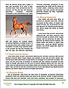 0000087141 Word Template - Page 4