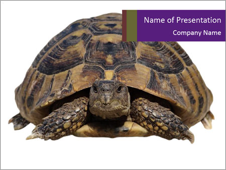 Turtle PowerPoint Template