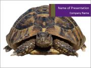 Turtle PowerPoint Templates