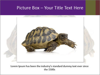 0000087173 PowerPoint Template - Slide 15