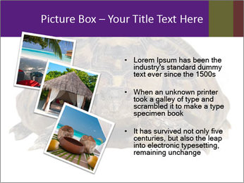 0000087173 PowerPoint Template - Slide 17