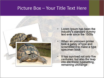 0000087173 PowerPoint Template - Slide 20