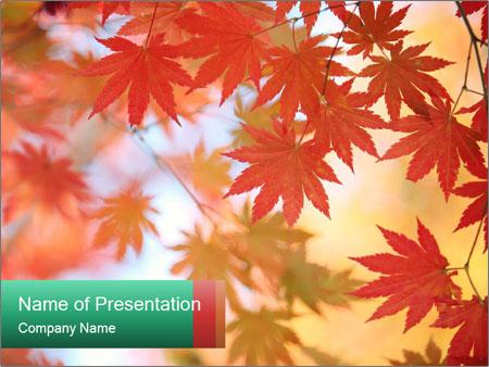 Autumn leaves PowerPoint Templates