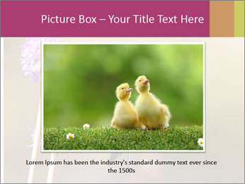 The flower PowerPoint Template - Slide 16