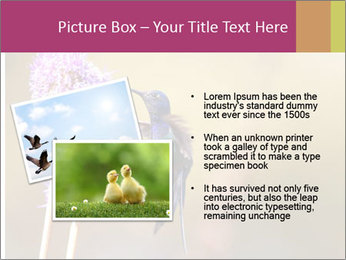 The flower PowerPoint Template - Slide 20