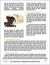 0000087240 Word Templates - Page 4