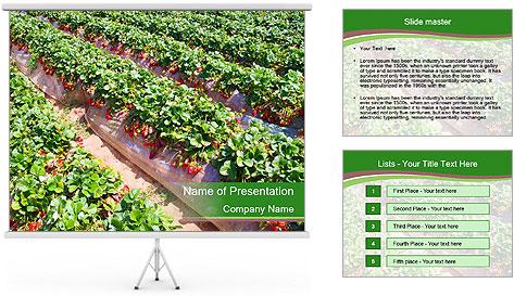 Strawberry field PowerPoint Template