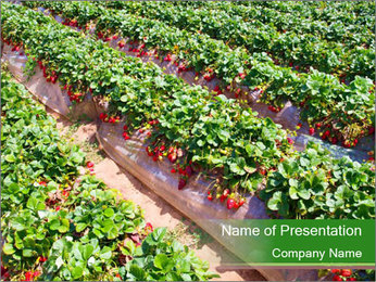 Strawberry field PowerPoint Template