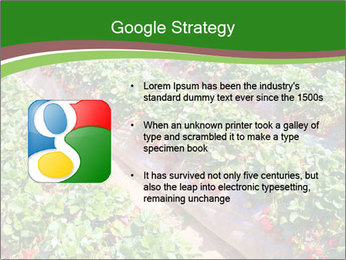 Strawberry field PowerPoint Template - Slide 10