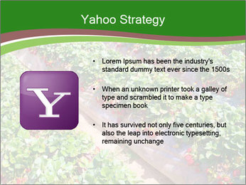 Strawberry field PowerPoint Template - Slide 11