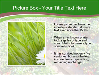 Strawberry field PowerPoint Template - Slide 13