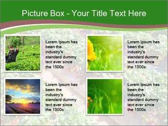 Strawberry field PowerPoint Template - Slide 14