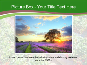 Strawberry field PowerPoint Template - Slide 15