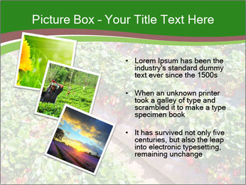 Strawberry field PowerPoint Template - Slide 17